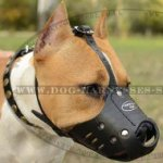 Amstaff Dog Muzzle of Natural Leather for Safe Everyday Use