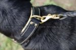 Wide Leather Dog Collar Nappa Padded for Swiss Mountain Dog