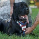 "Cane Corso Hand Painted Leather Harness ""American Pride"""