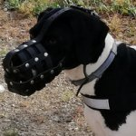 Great Dane Dog Muzzle Leather Mesh with Good Air Circulation
