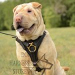 Bestseller! Shar Pei Walking Leather Dog Harness UK