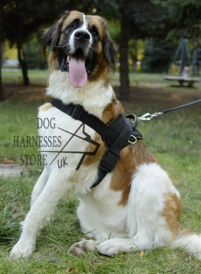 Walking Harness for Moscow Watchdog, Nylon, All-Weather
