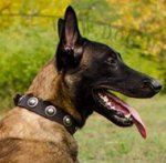 Fancy Dog Collar with Round Medals for Belgian Shepherd