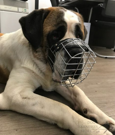 Saint Bernard Dog Muzzle of Wire for Daily Walking and Training