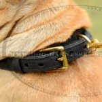 Shar-Pei Collar UK Two-Ply Leather with Elegant Braid for Walks