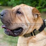 Shar-Pei Collar with Spikes and Plates for Walking and Control