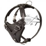 Leather Dog Harness for Walks with Medium Breeds UK