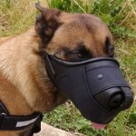 Belgian Malinois Dog Muzzle Improved of Leather and Nylon