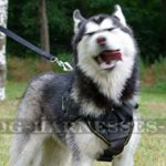 Dog Sport Harness UK for Husky, Universal ONE!
