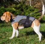 Warm and Support Your Beagle with the Best Dog Harness Vest!