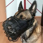 Belgian Malinois Basket Muzzle with Rubber Cover and Leather