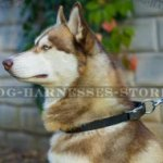 Dog Collar for Husky of Nylon with Quick-Release Metal Buckle