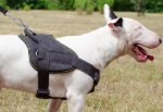Dog Sport Harness of Hard-Wearing Nylon for English Bull Terrier