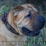 Dog Collar for Shar-Pei, Leather with Vintage Plates and Cones