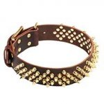"Leather Dog Collar with Waves of Sparkling Brass Barbs ""Stinger"""