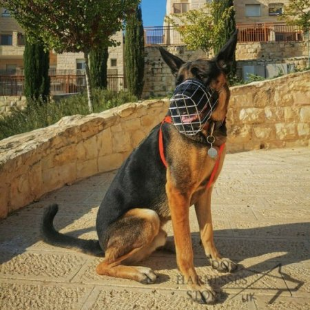 Wire Muzzle for Large German Shepherd Walking and Training
