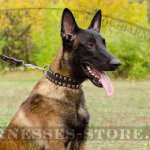 Leather Dog Collar Great Caterpillar Style for Belgian Malinois