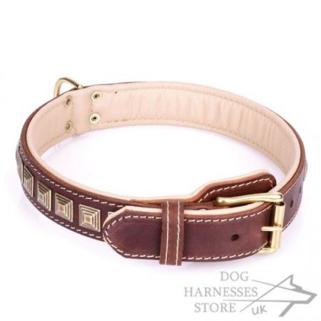 "Brown Leather Dog Collar with Brass Studs ""Pyramid"""