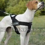 Bestseller! English Pointer Harness of Nylon with Patches