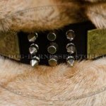 Shar-Pei Collar with Nickel Spikes, Pyramids and Brass Plates