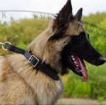 Tervuren Collar for Obedience Training, Leather, Adjustable