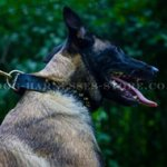 Brass Spiked Leather Dog Collar for Belgian Malinois Luxury Look