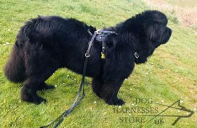 Bestseller! Padded Dog Harness for Newfoundland, Handmade