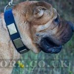 Shar-Pei Collar for Walking of Leather with Vintage Brass Plates