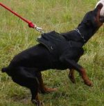Bestseller! Nylon Dog Harness for Doberman Training and Sport