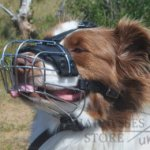 Muzzle for Australian Shepherd of Wire with Perfect Ventilation