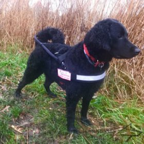 Bestseller! Guide Harness with ID Patches for Assistant Dogs UK