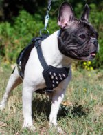 Spiked Dog Harness with Padded Chest for French Bulldog Walking