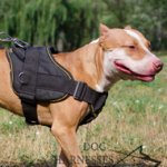 Dog Sport Harness Nylon for Pitbull, Handle and Padded Chest