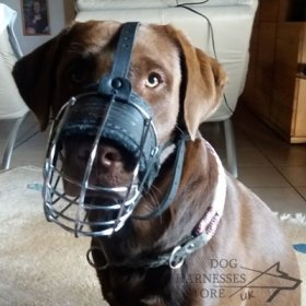 Labrador Muzzle of Wire for Every Day, Super Comfort and Safety