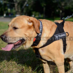 Nylon Harness for Professional Golden Retriever Training, Work