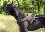 Dog Training Harness Nylon with Padded Chest for Great Dane