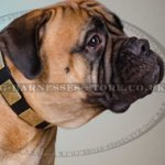 Bullmastiff Leather Collar with Gorgeous Brass Plates
