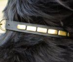 Fashion Dog Collar Necklace Style for Newfoundland Daily Walks