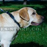"Best Collar for Labrador of Simple Design, 1.2"" Width"