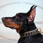 Soft Collar for Dogs with Golden Spikes and Soft Padding