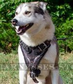 "Designer Dog Harness ""Barbed Wire"" for West Siberian Laika"