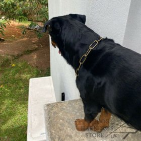 Bestseller! Chain Collar for Rottweiler Obedience Training