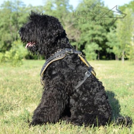 Black Russian Terrier Royal Leather Harness with Studded Chest