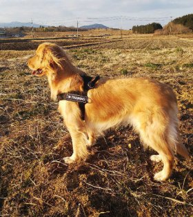 Dog Harness of Super Strong Nylon for Easy Walking and Training