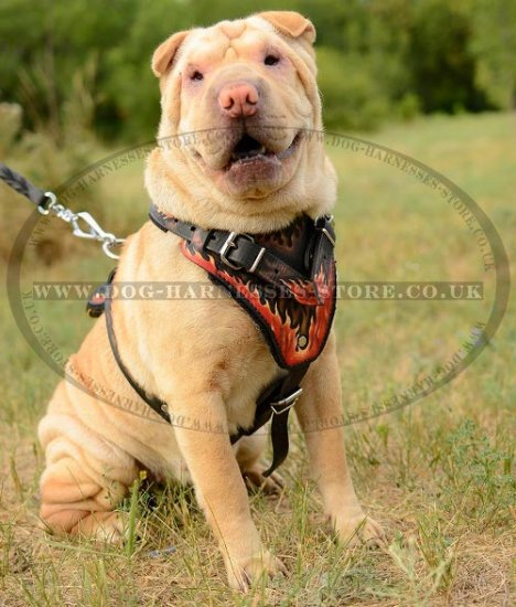 Shar Pei Harness with Hand Painted Flames, Genuine Leather