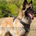 Belgian Tervuren Dog Harness Leather with Nickel Pyramids
