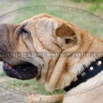 Shar-Pei Collar Nylon with Nickel Pyramids for Walk and Training