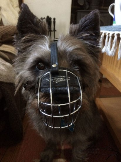 Cairn Terrier Muzzle of Wire, Universal Model for Daily Use