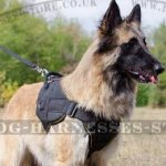 Belgian Tervuren Dog Harness of Nylon for Multipurpose Use