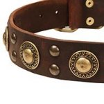 Cool Modern Dog Collar UK with Gold-Like Brass Circles and Studs